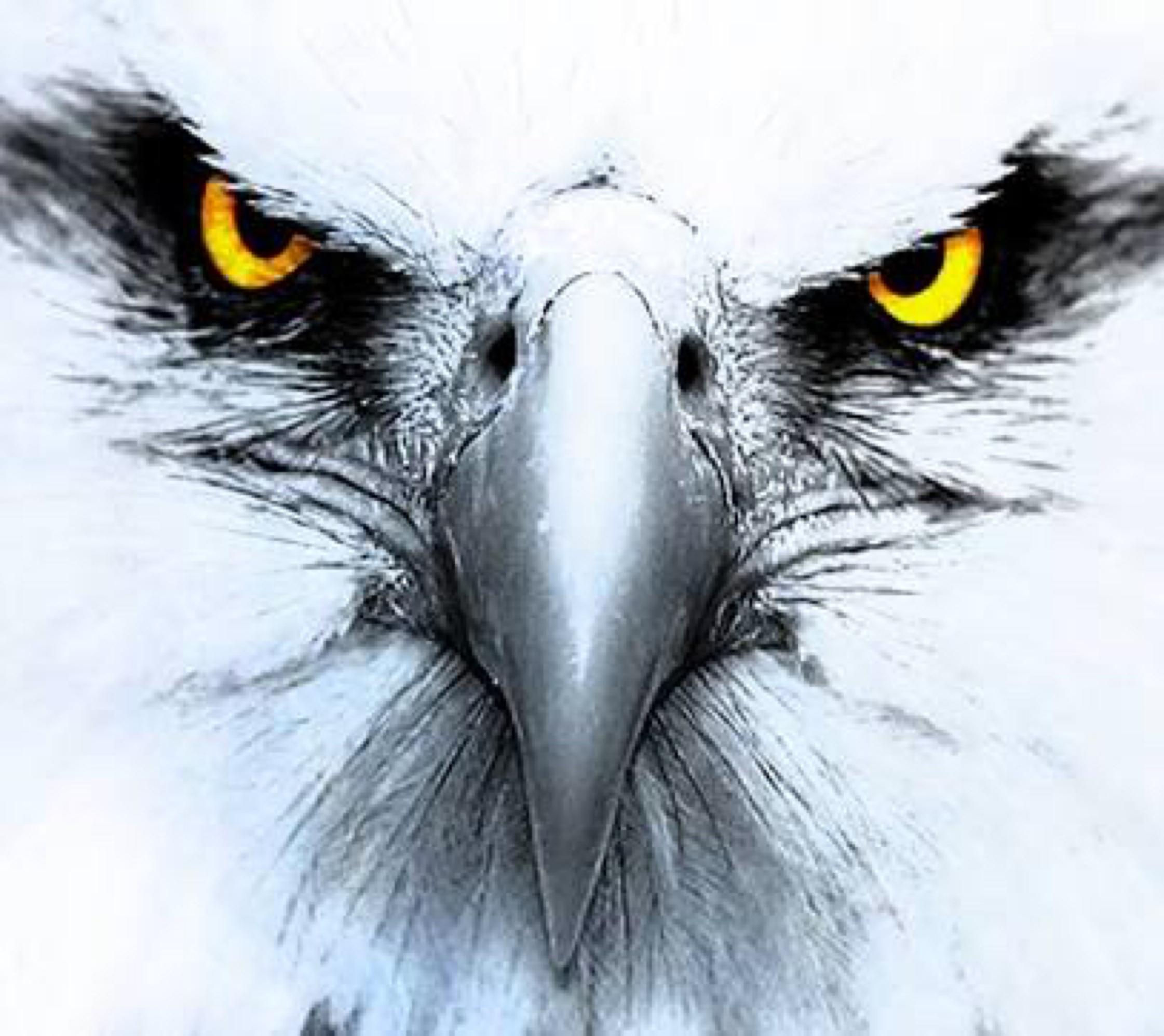 Eagle Eye Gun Shop